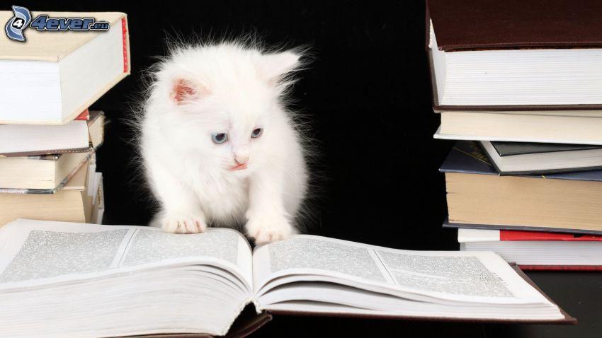 gatito blanco, libros