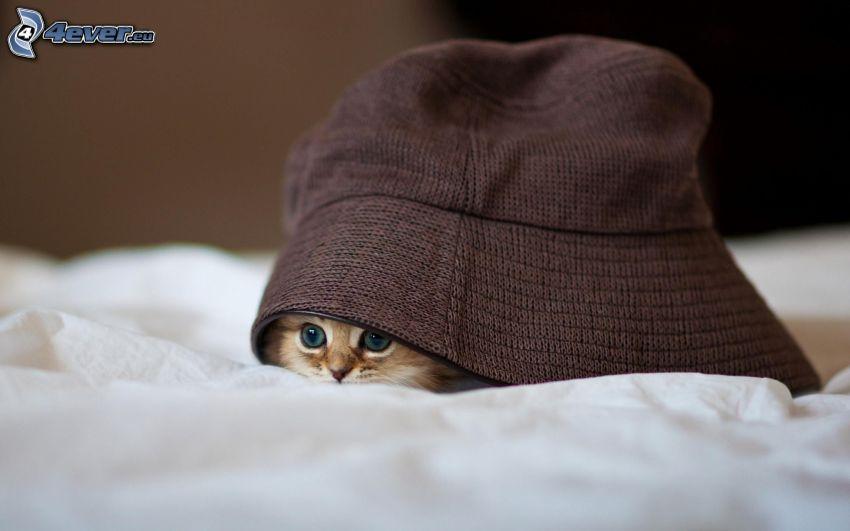 gatito pequeño, gorro
