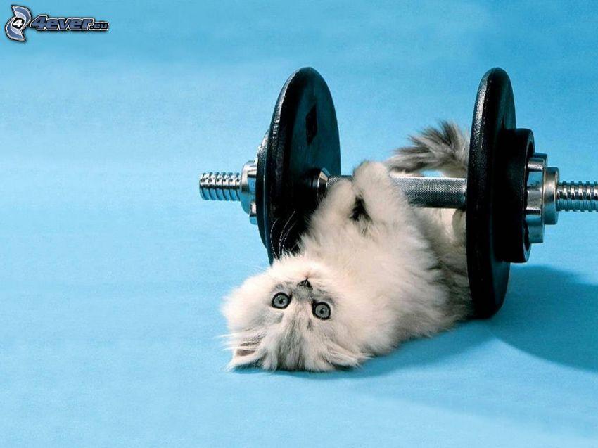 gatito pequeño, pesa