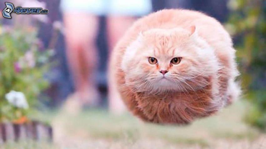 gato, vuelo, salto