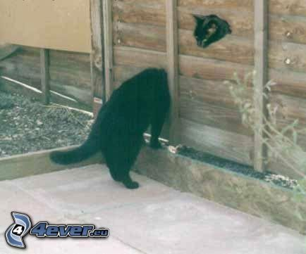 gato alargado, gato negro, cerco de madera, cola