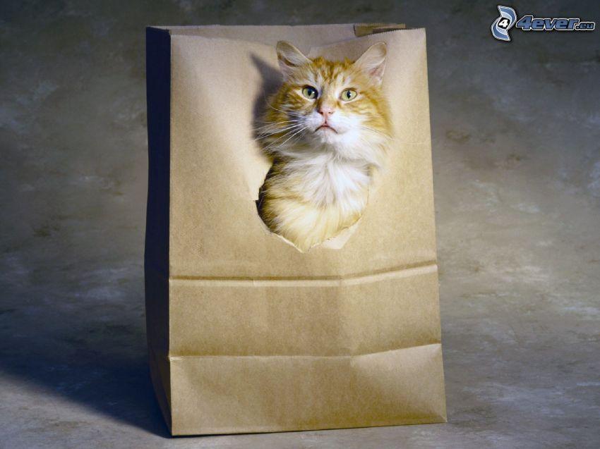 gato de pelo pelirrojo, bolsa