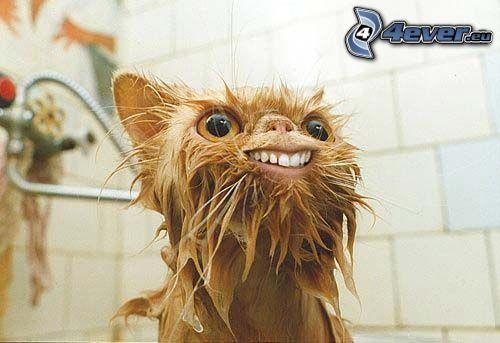 gato mojado, cuarto de baño