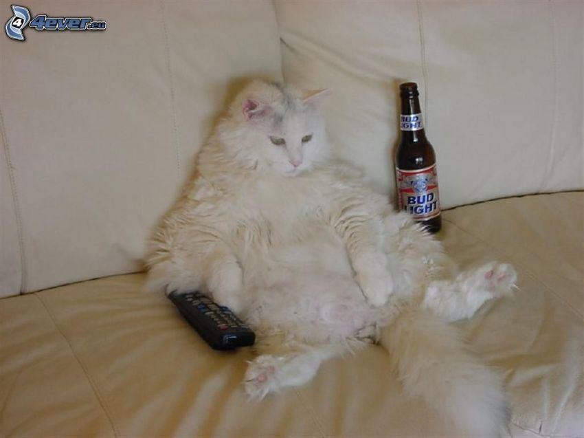 gato perezoso, relax, cerveza