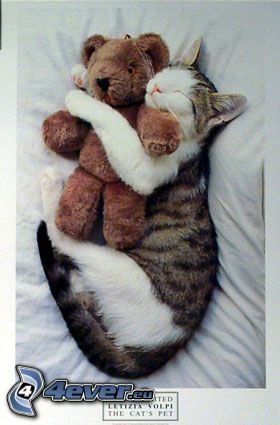 Gato que duerme, oso de peluche, abrazo en la cama