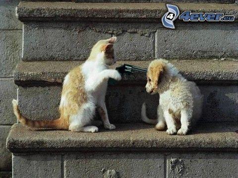 gato y perro, odio, pistola, asesinato, escalera