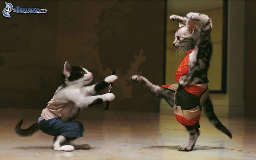 gatos, kung fu