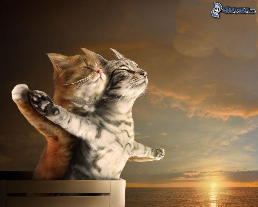 gatos, Titanic, puesta de sol en el mar
