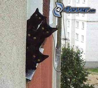 gatos negros, ojos, casa prefabricada