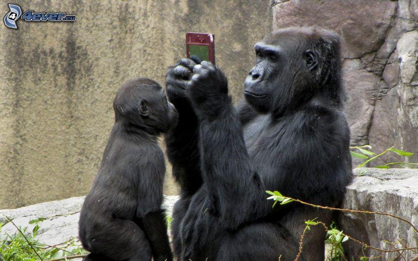 gorila, cachorro, juego