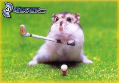 hámster, golf