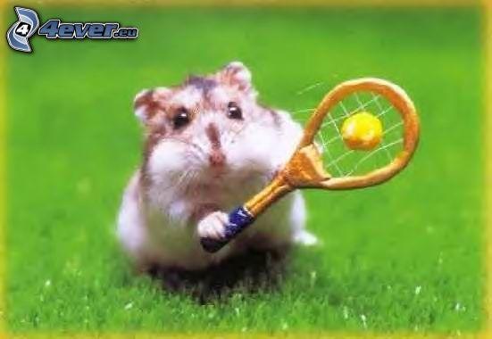 hámster, tenis