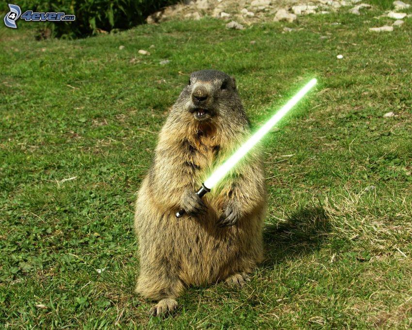marmota, sable de luz, Star Wars, parodia