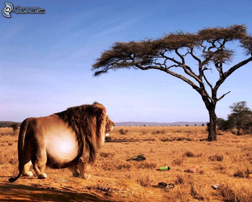 McDonald's, África, león, sabana