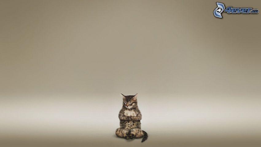 meditación, gato