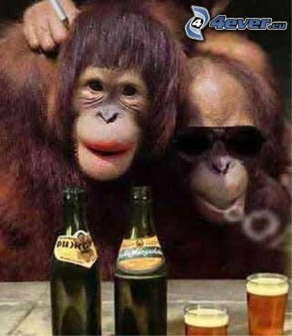 monos, cerveza