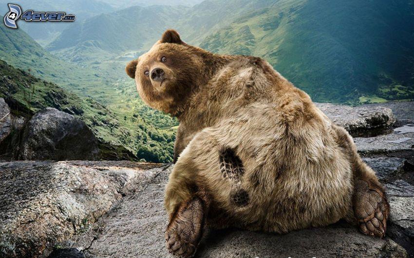 oso, imprime, rocas, colina