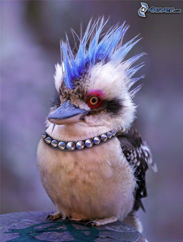 pájaro, punker