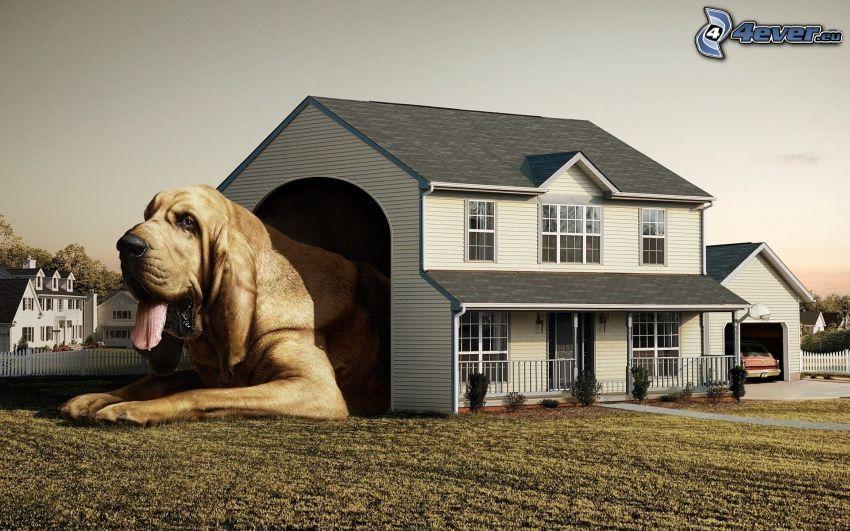perro, caseta de perro, casa