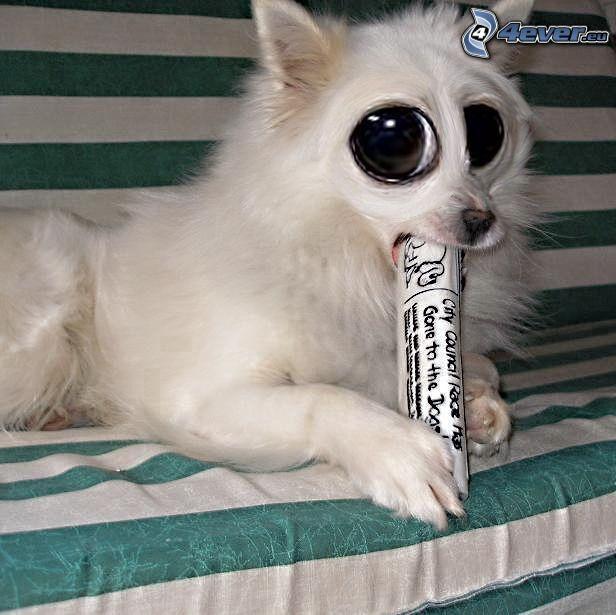 perro, ojos grandes, periódico
