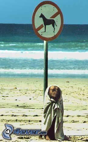 perro, playa, prohibición, señal, mar