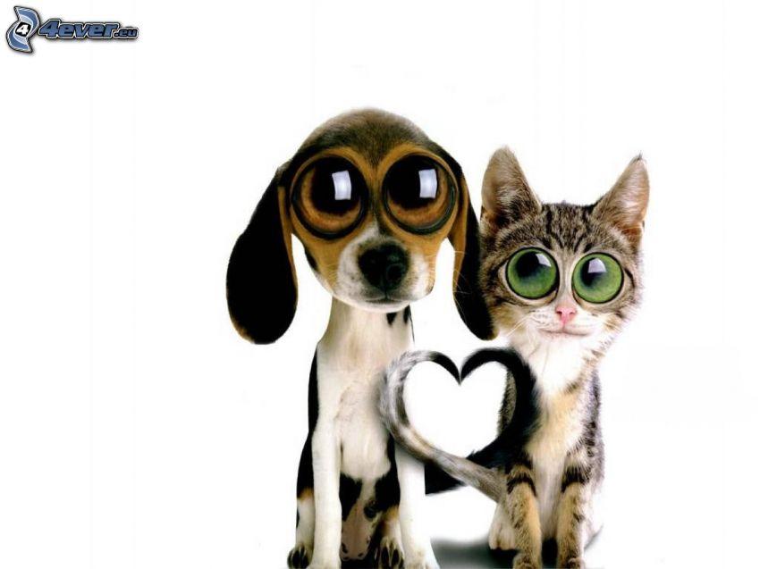 Perro y gato, corazón, ojos grandes