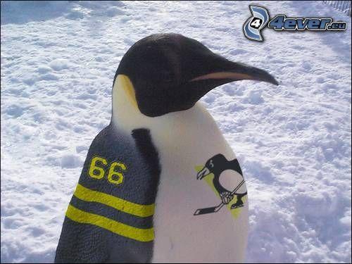 pingüino, camiseta de equipo, fan
