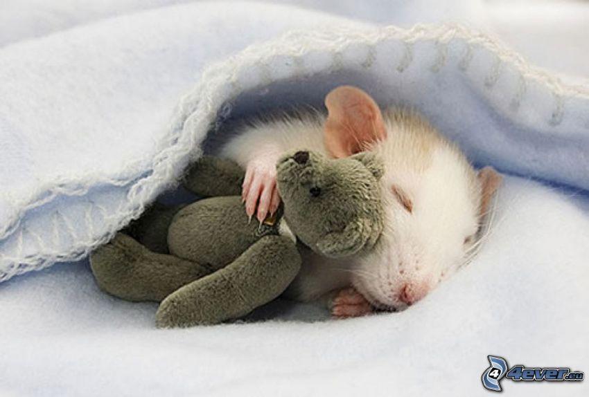 rata, oso de peluche, dormir, manta