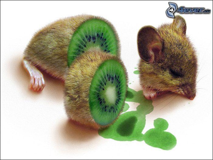 ratón, kiwi en rodajas