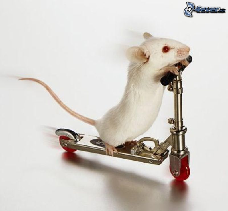 ratón, patinete