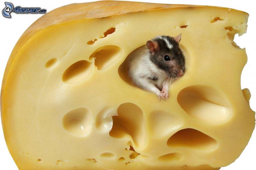 ratón, queso