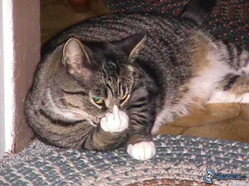 sinceridad, gato, gesto