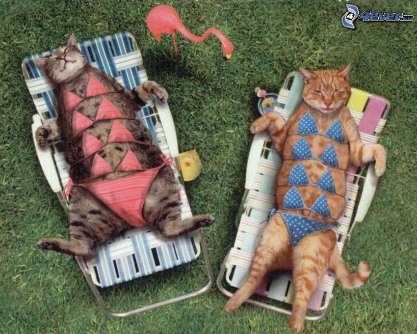 tomar sol, gatos