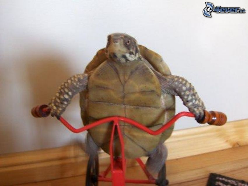 tortuga marina, bicicleta
