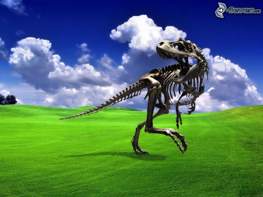 Tyrannosaurus, esqueleto, hierba, nubes, cielo