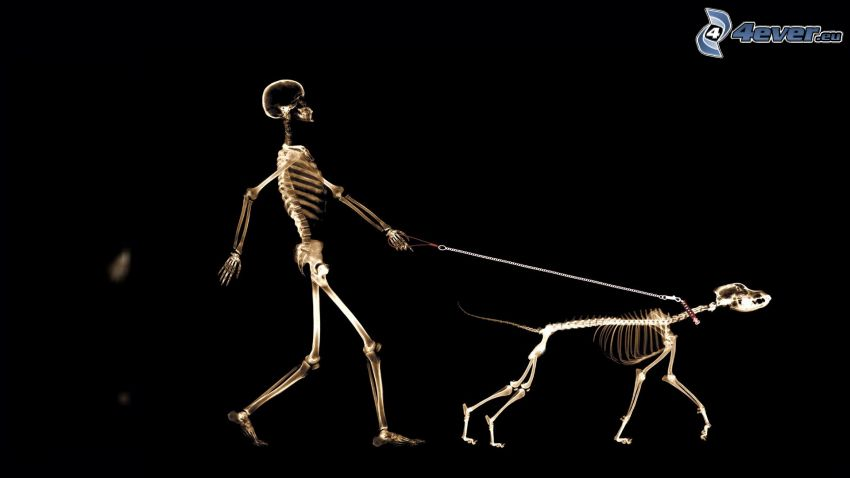 esqueletos, hombre, perro