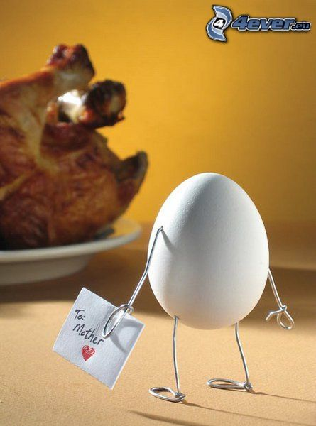 huevo, pollo, carta