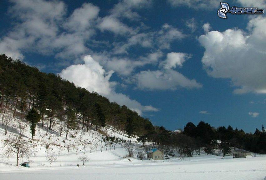paisaje nevado, árboles coníferos, colina