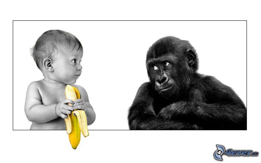 bebé, mono, plátano