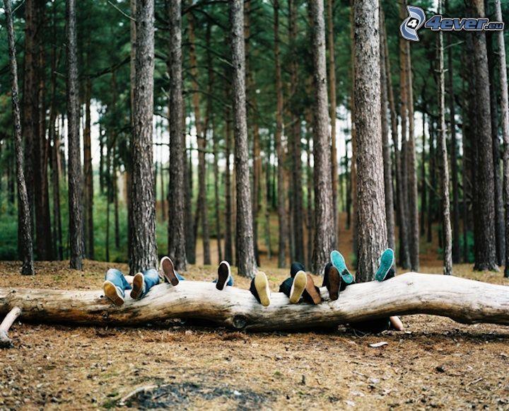 descanso, bosque, entretenimiento