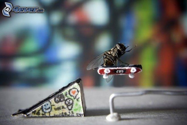 mosca, skateboard, salto