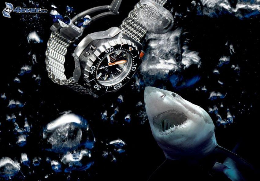 reloj, tiburón
