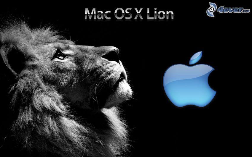 Mac OS X Lion, león, Apple
