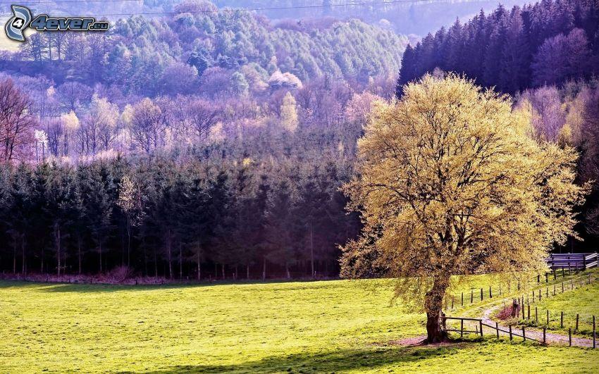 árbol, bosque, prado, camino de campo
