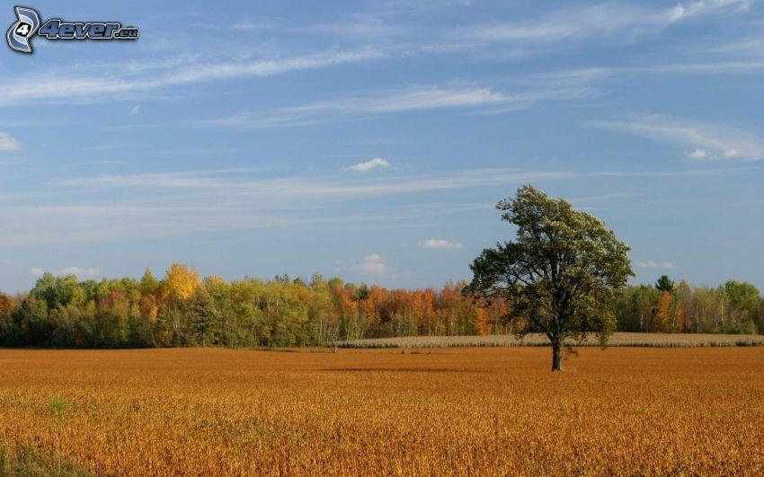 árbol, campo, árboles de colores