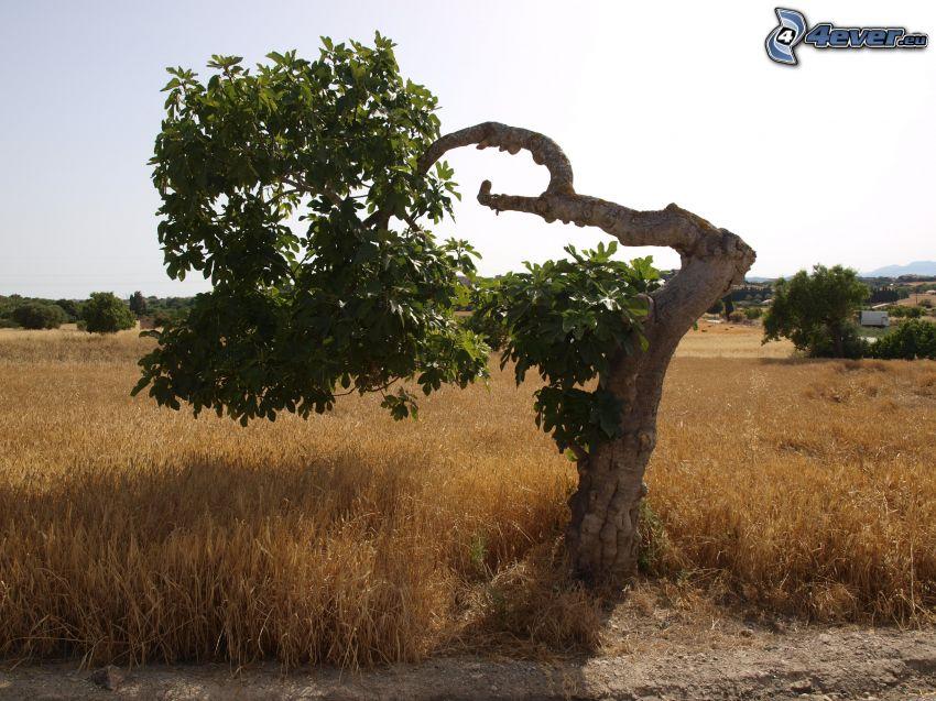 árbol, campo