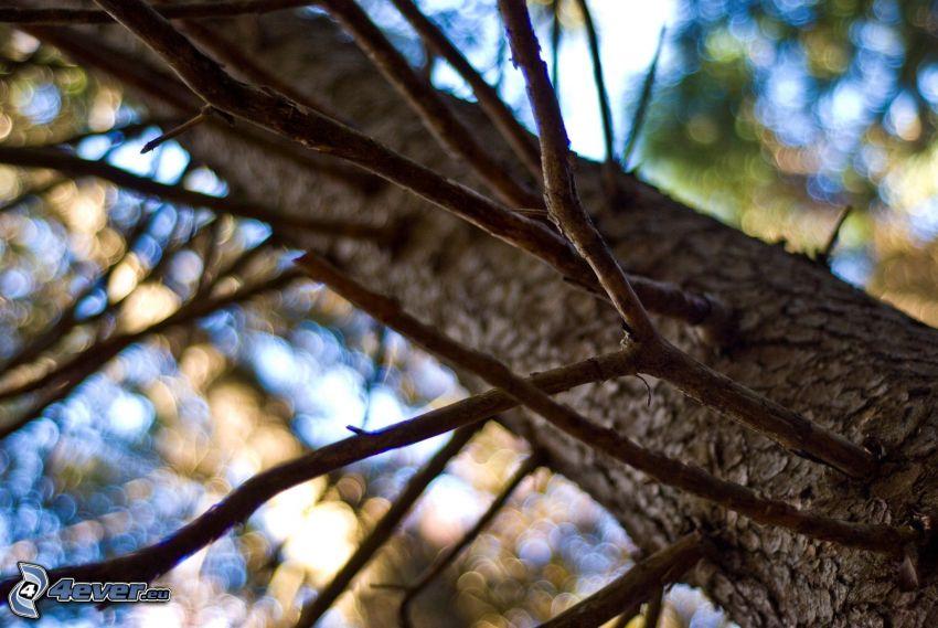 árbol, corteza de árbol