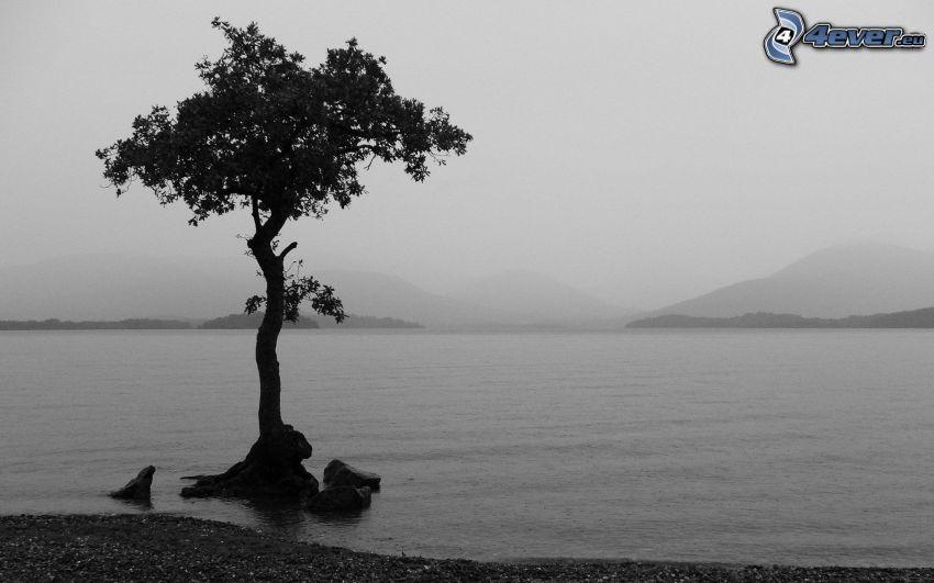 árbol, lago, sierra