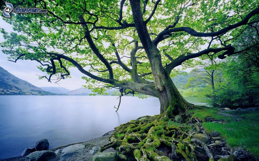 árbol, lago