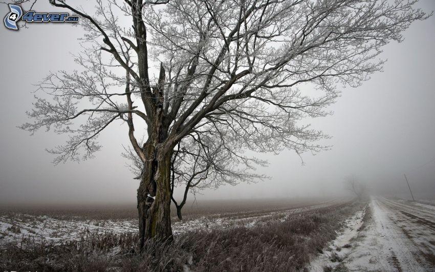 árbol congelado, camino de campo, nieve, niebla